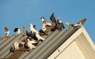 Как отвадить птиц от окна