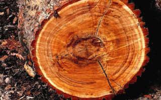 Как правильно определить влажность древесины?