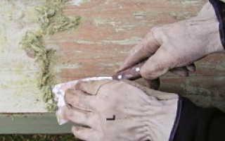 Зачем нужна обработка дерева морилкой и лаком?