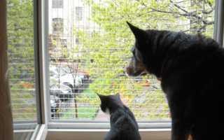 Сетки на окна антикошка своими руками